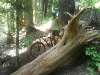 ranger tree cmp