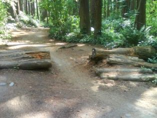 St. ed's path and logs