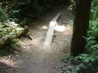 St. Ed's plank
