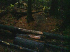 paradise valley log pile 2